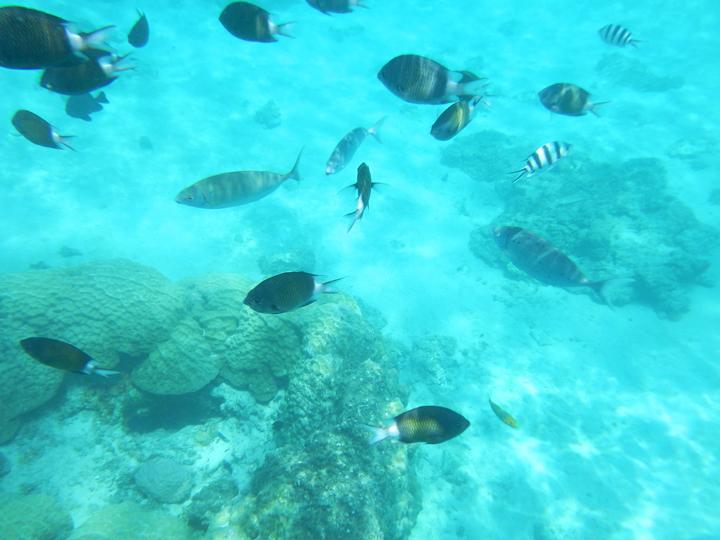 珊瑚礁や熱帯魚