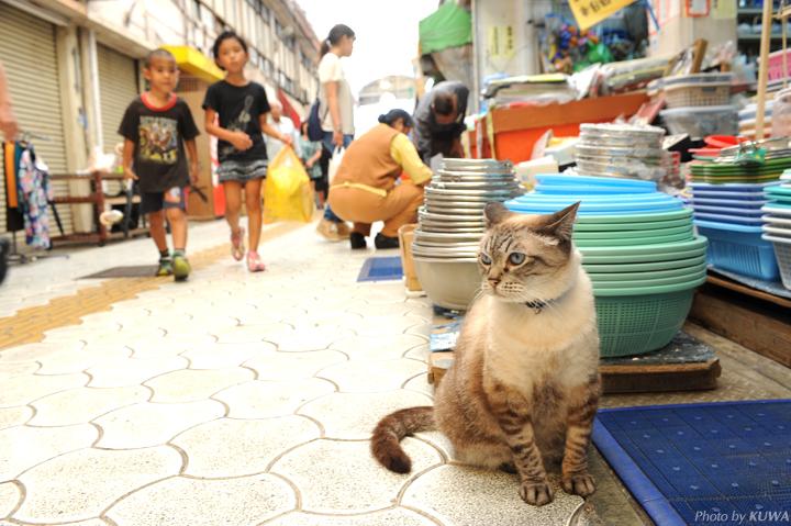 地元の人からも愛されている猫たち