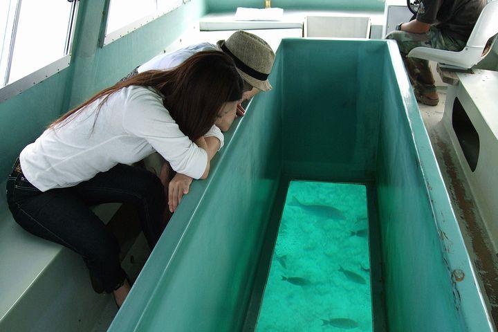 グラスボートで海の中の世界を楽しもう