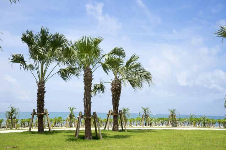 沖縄旅行の最終日におすすめ!那覇空港の周辺で楽しめる沖縄観光スポット