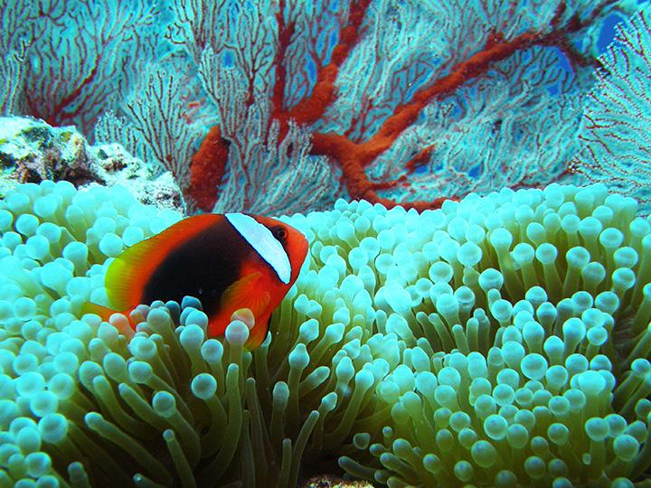 うるま市の海でダイビングしてみましょう。南国の熱帯魚もみれますよ