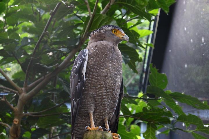 沖縄こどもの国では珍しい動物もたくさん観ることができます