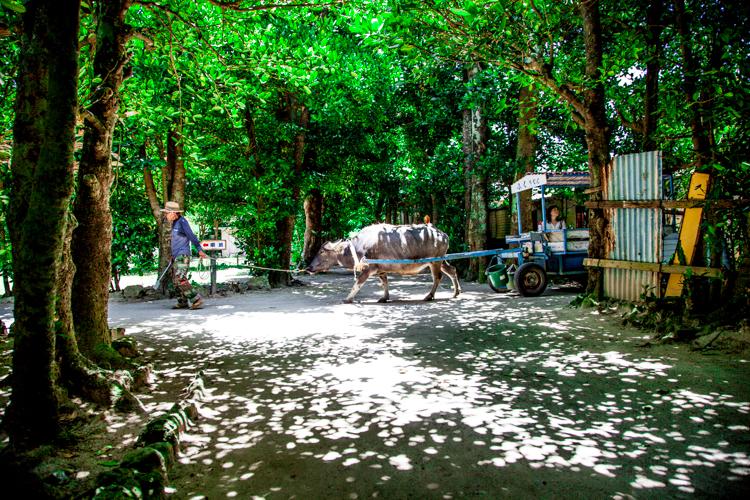 時が止まる楽園・備瀬のフクギ並木