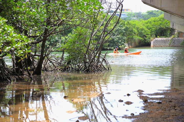 石垣島「宮良川のヒルギ林」のマングローブ林