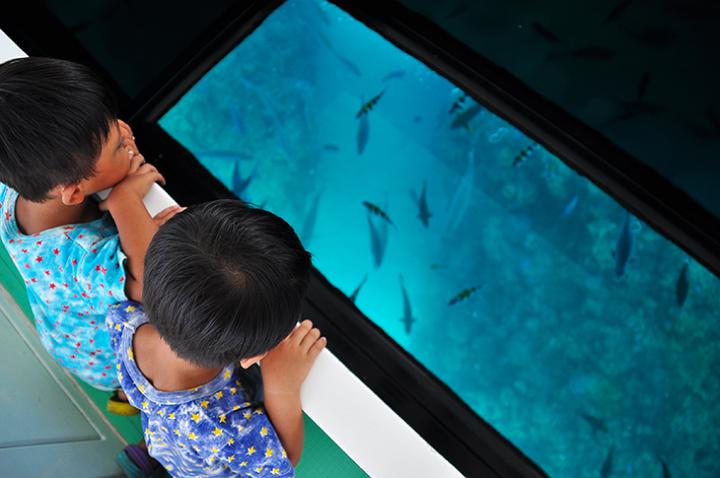 濡れずに熱帯魚に会える!グラスボードに乗れるスポット3選