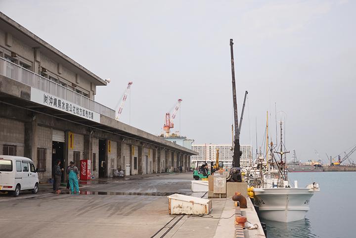糸満漁港は、セーイカ漁獲量日本...