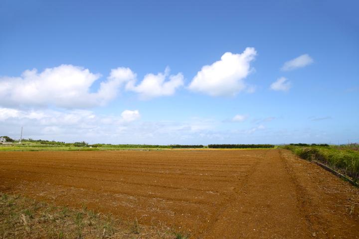 人参の耕作地