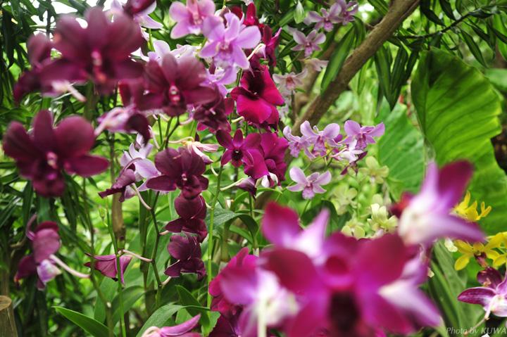 ビオスの丘の蘭の写真