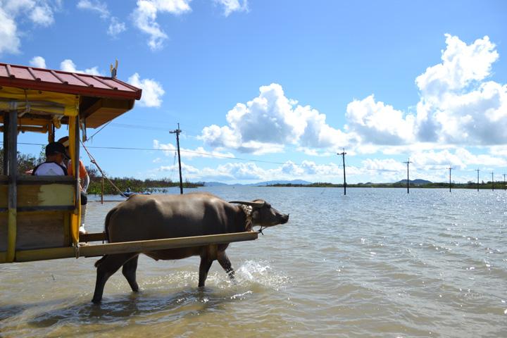 물소 차를 타고 가자, 아열대 식물원 유부 섬