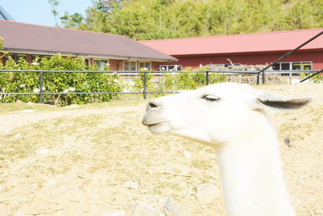 네오 파크 오키나와 (나고 자연 동식물 공원)에서 얀바루의 자연을 만끽!