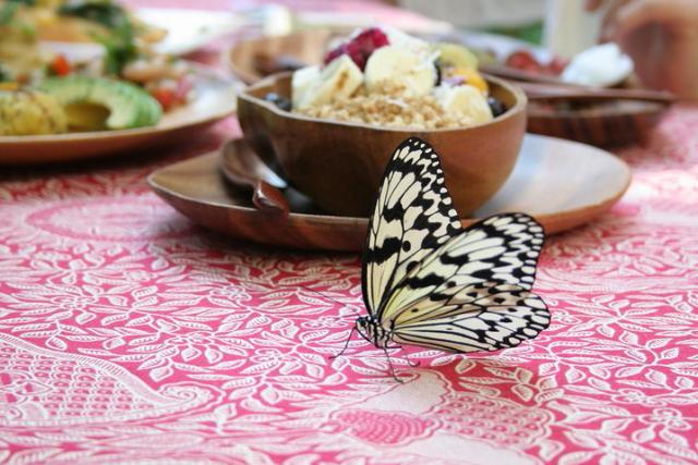 녹색 정원을 나비가 춤추는, 아침 카페「니훼~라」