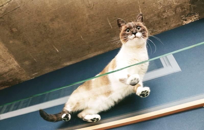 キャットウォークに「強化ガラス」を使用した事例(東京都H様)のお写真