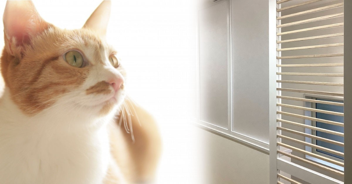 お客様事例 : 割れないガラスで安全!猫の脱走を防ぐ扉に「樹脂ガラス」を使用した事例(東京都T様)