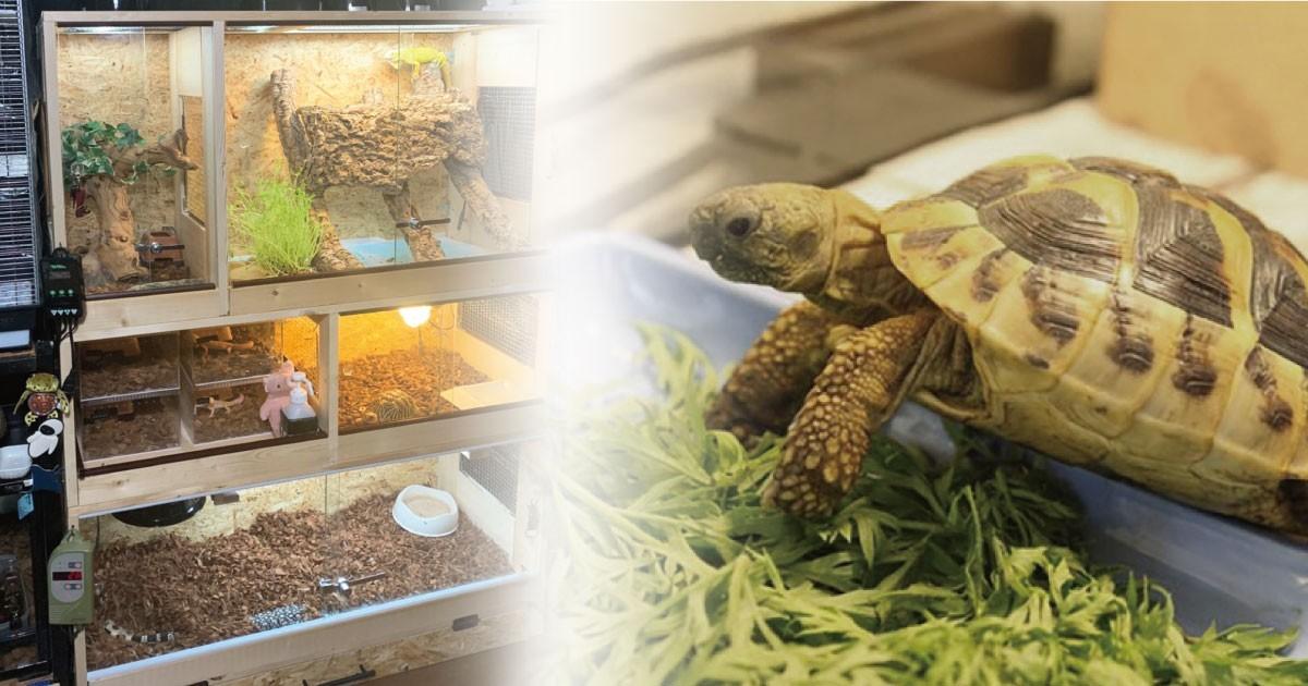 お客様事例 : ガラス戸でペットがより身近に!爬虫類のケージに「フロートガラス」を使用した事例(愛知県O様)