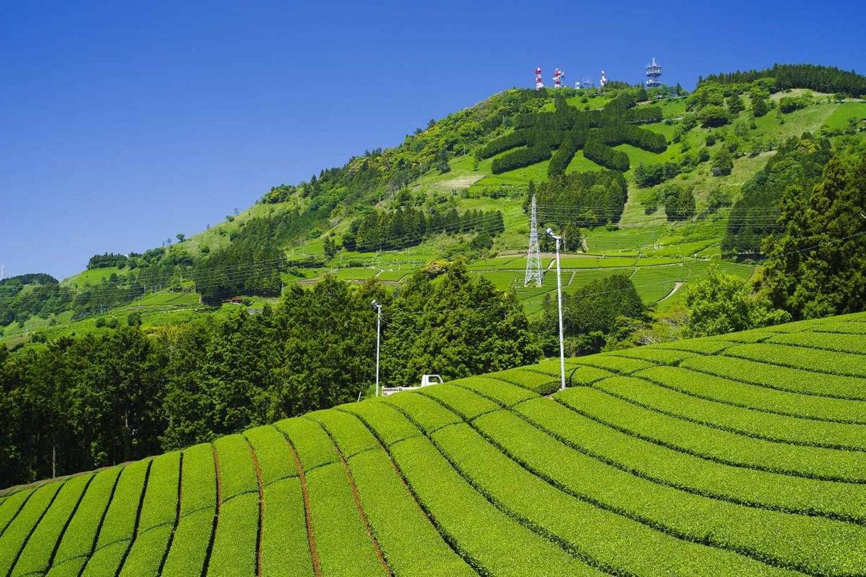 """传统的茶草场农业方法的圣地! 围绕""""茶文字""""的家乡、东山地区"""