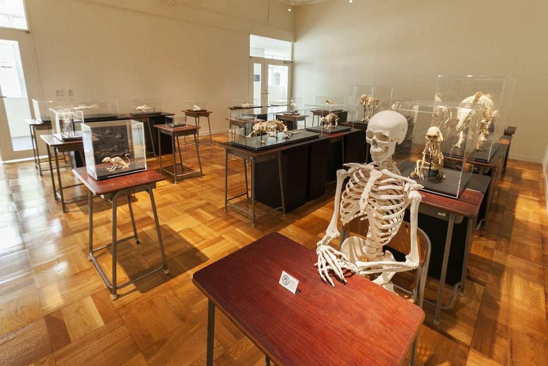 静岡の過去・現在・未来をめぐる「ふじのくに地球環境史ミュージアム」徹底解剖!
