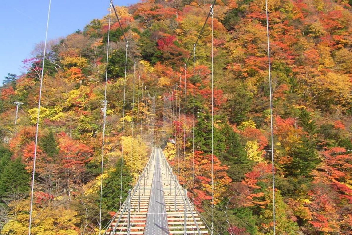 Let's spend time with colored leaves of unexplored region, okushizu of Shizuoka-city in autumn of healing