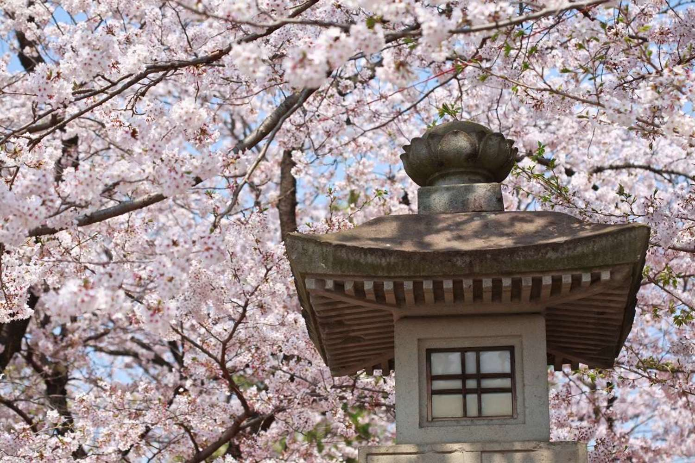 桜の名所としても有名! 伊豆のパワースポット「三嶋大社」