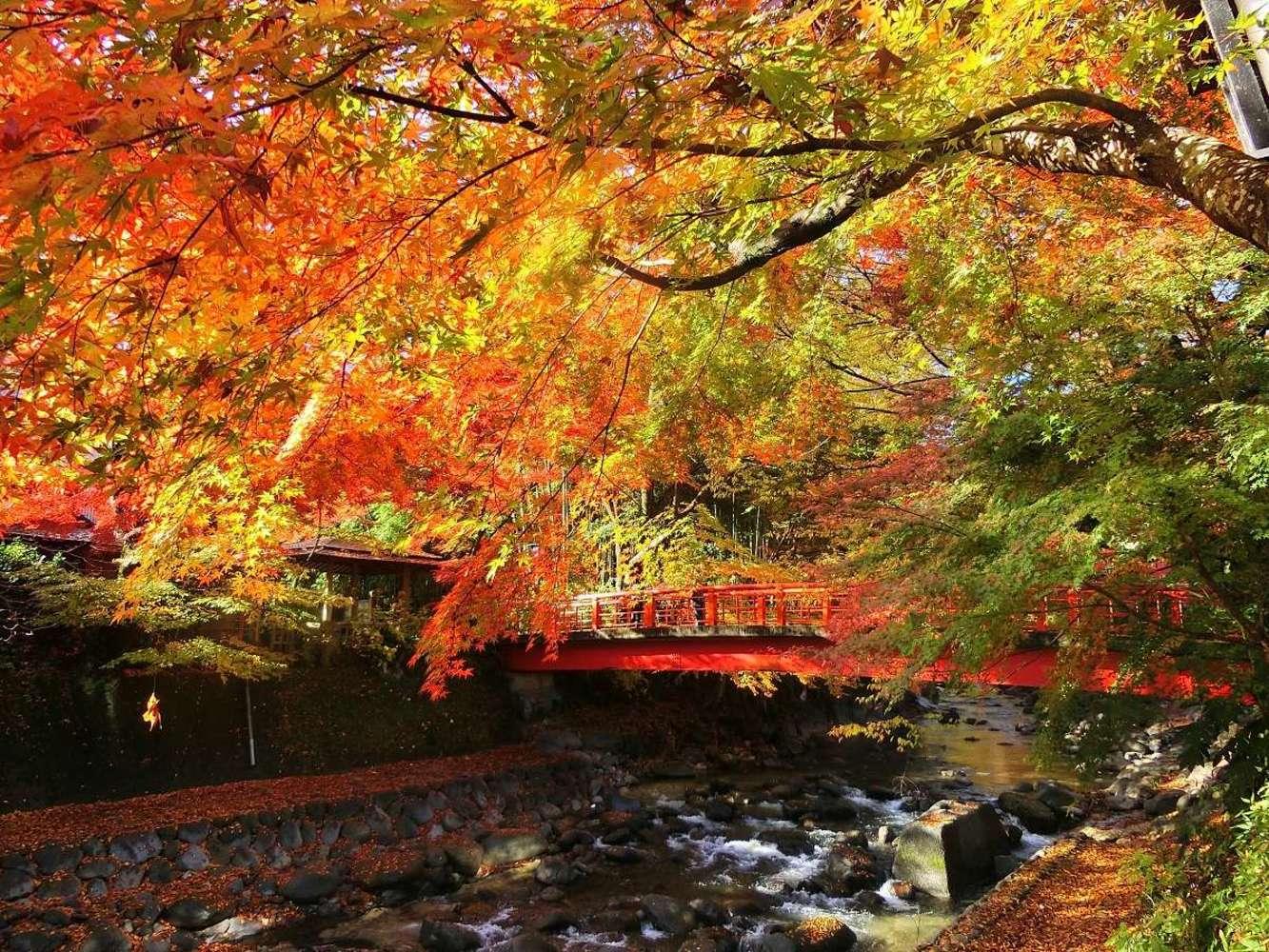 ¡Disfruto el color del otoño luminoso para quemar! La mancha de los nodos terminal colorada de Shuzenji, Amagi