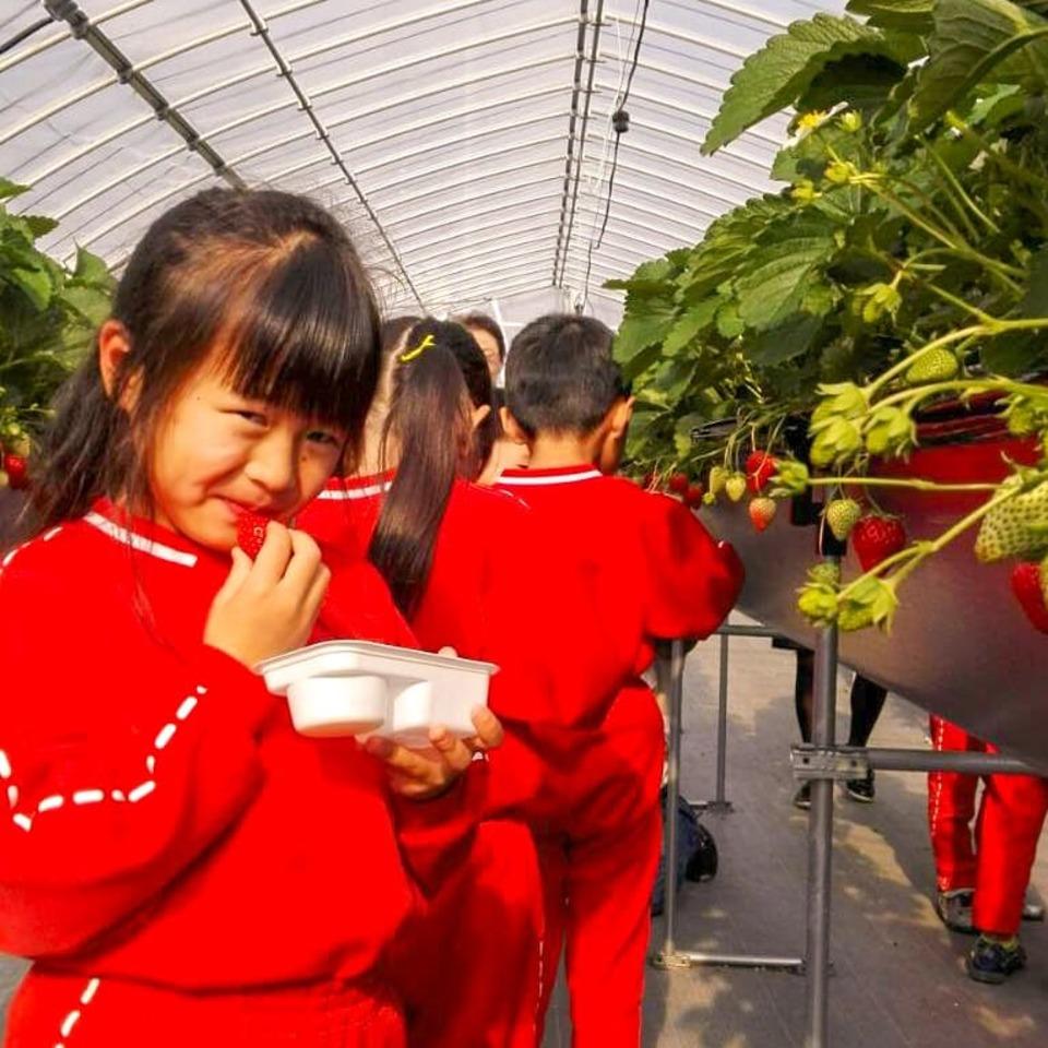 江間摘草莓中心