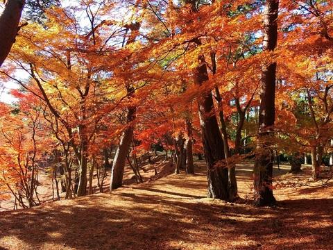 Công viên thiên nhiên Shuzenji