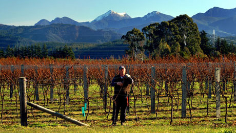 Opawa Vineyard