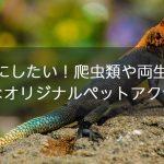 参考にしたい!爬虫類や両生類のお洒落なオリジナルペットアクセサリー!