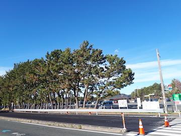浜名湖ガーデンパーク16