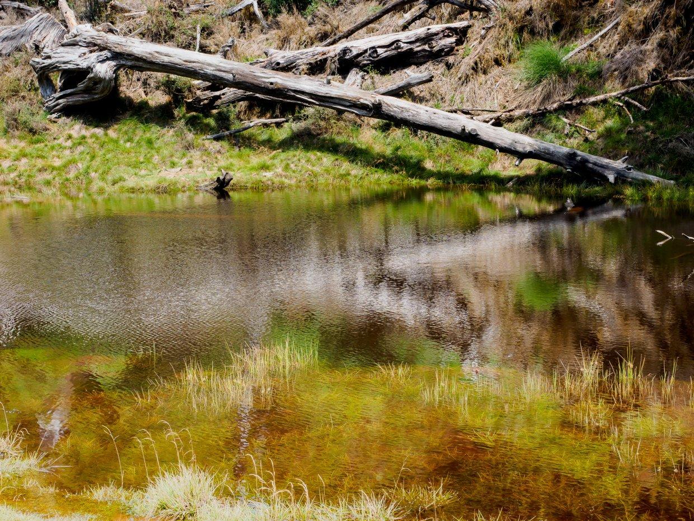 偉蛋池的池水清澈如明鏡