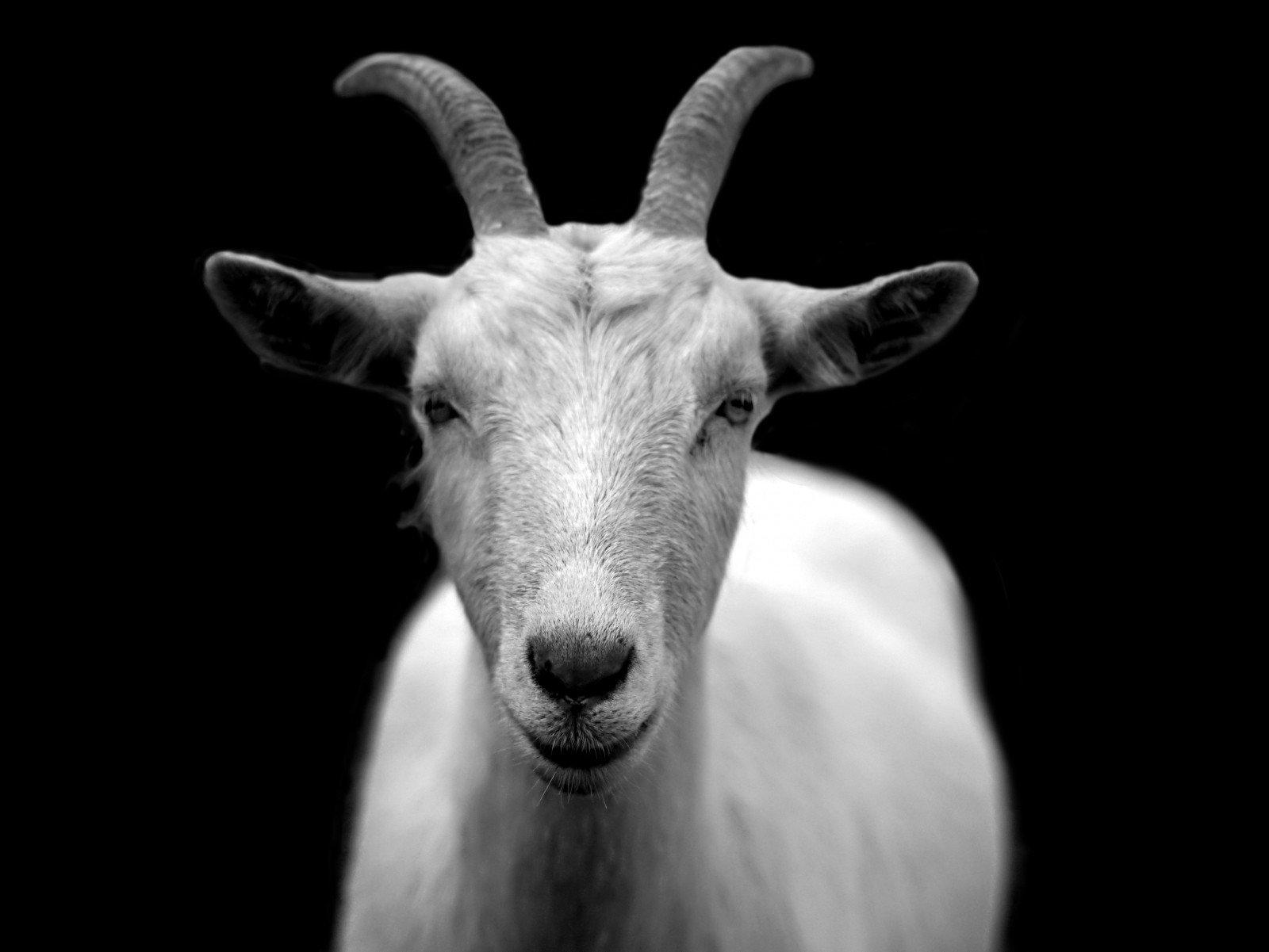 ▲<em>羊肉</em>暖身補氣,是冬季最受歡迎的食材之一
