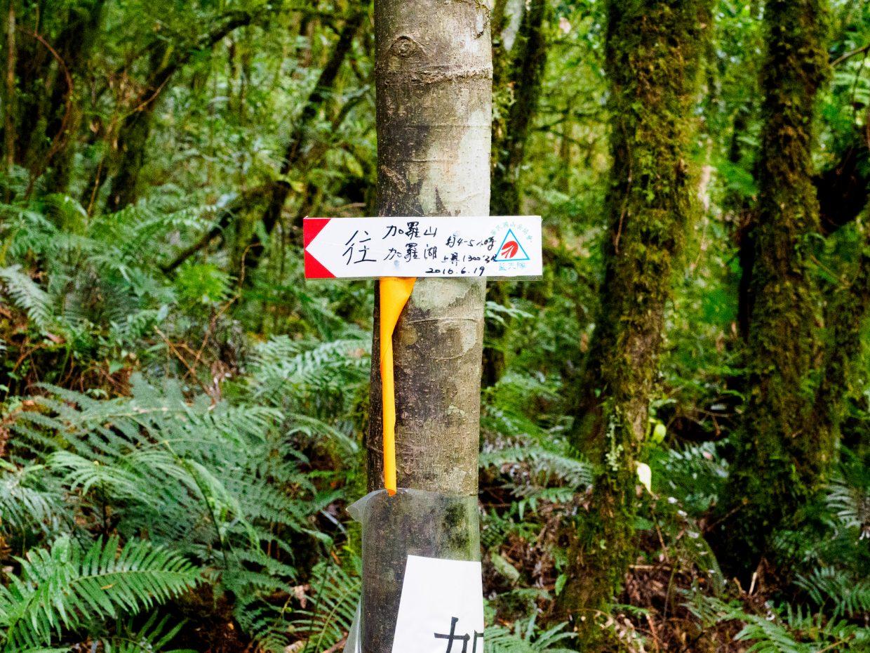 整條林道不只有林務局的黃色標記,也有熱心山友製作的路牌指標