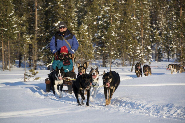 瑞典哈士奇雪橇自駕