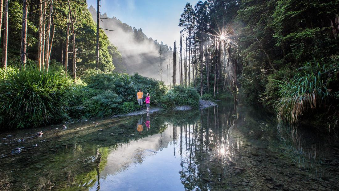 阿里山水漾森林