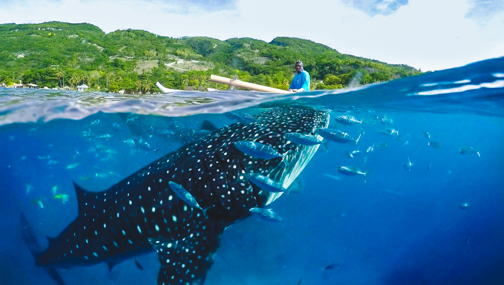 宿霧歐斯陸鯨鯊共遊