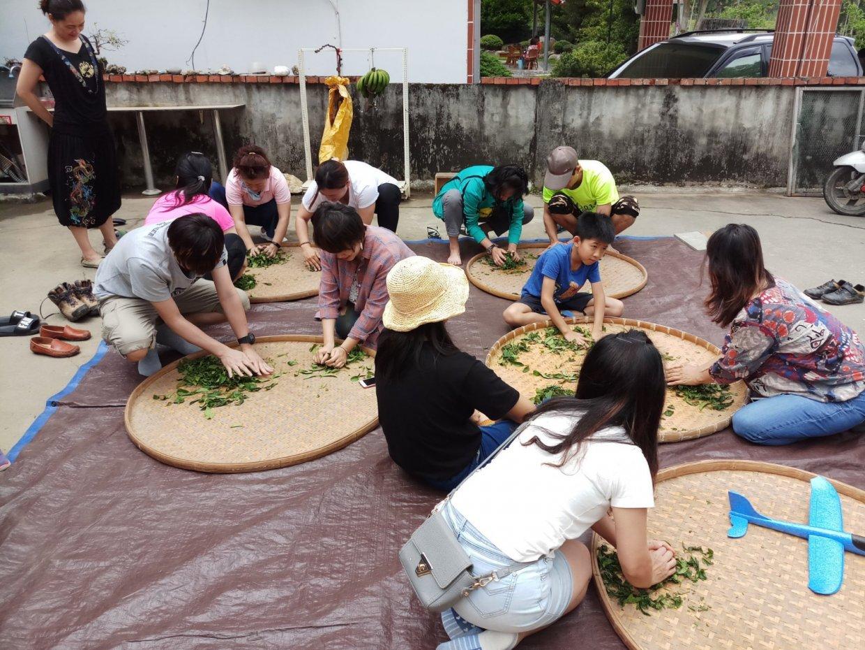 在台東鹿野高台茶園體驗採茶人辛勞