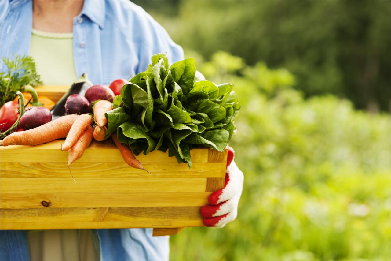 蔬菜箱可說是近年很夯的食材。