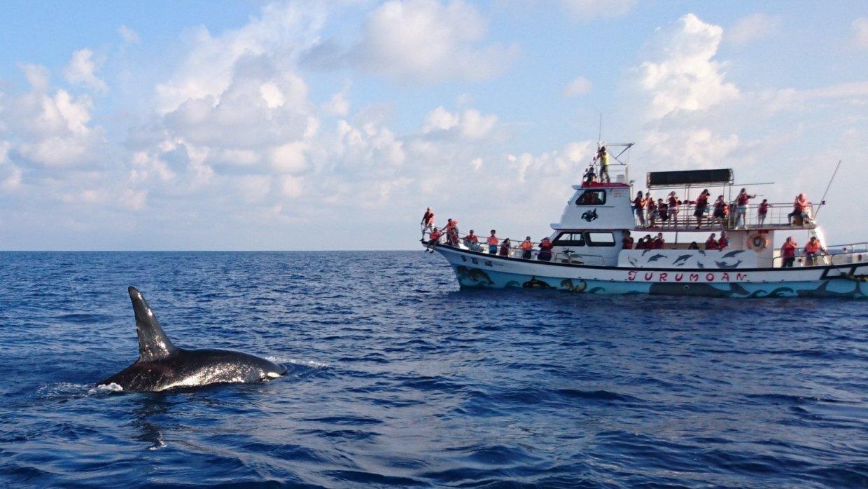 在花蓮外海的賞鯨船上欣賞海中蛟龍