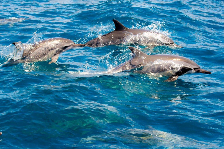 來宜蘭賞鯨別忘了順便登龜山島呦