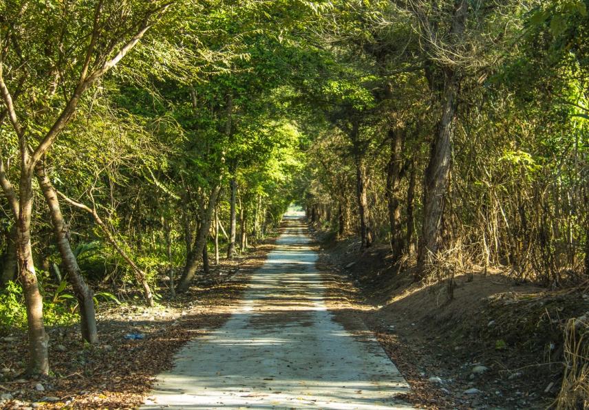 在台東龍貓森林欣賞絕美花東景色