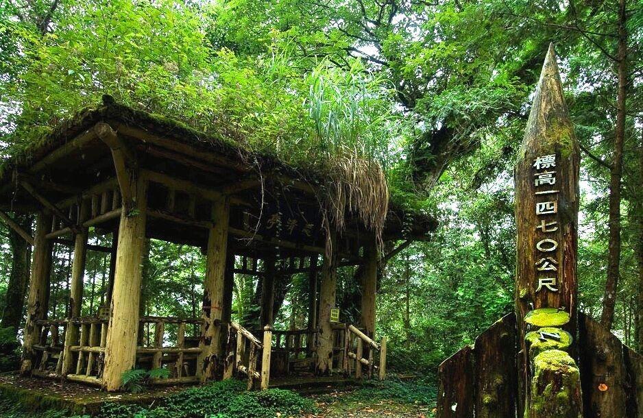 棲蘭神木園步道