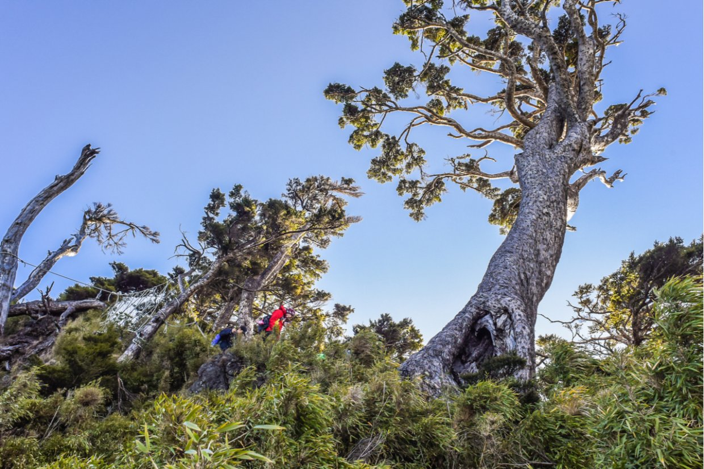 屏東拾美步道群|精選10條森林秘境登山步道到大自然森呼吸吧