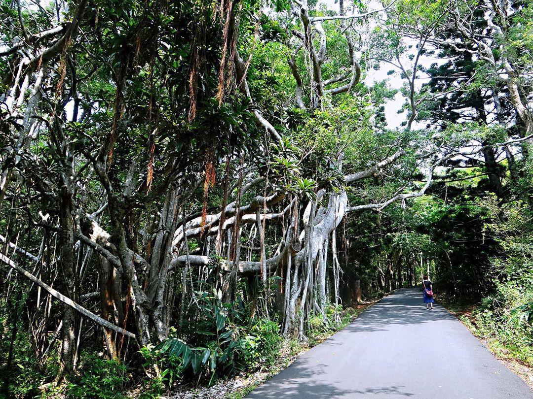 墾丁國家森林遊樂區步道@zhang Zhengji