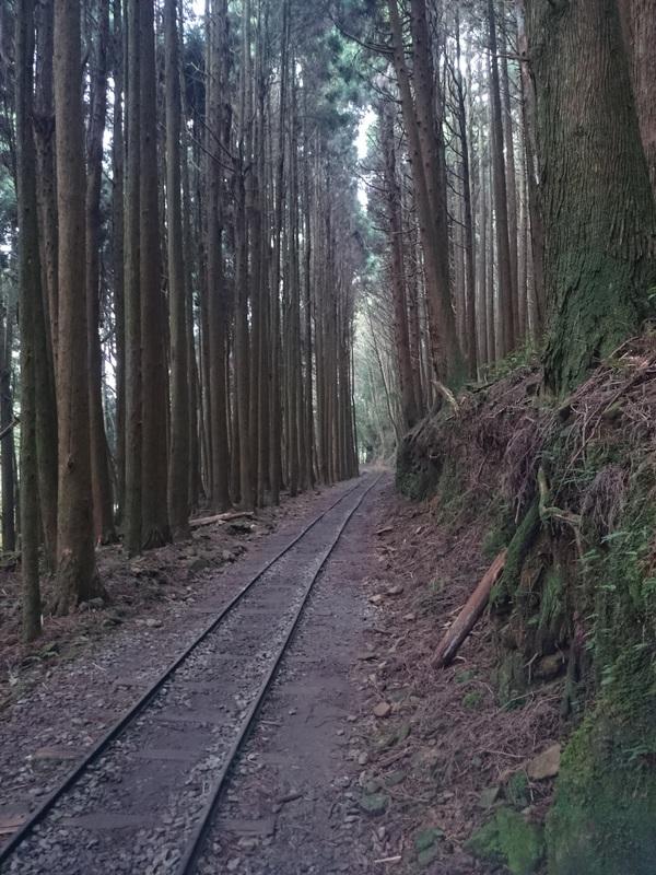 精選8條嘉義登山步道秘境|踏遍古道享受森林清新空氣與鳥鳴