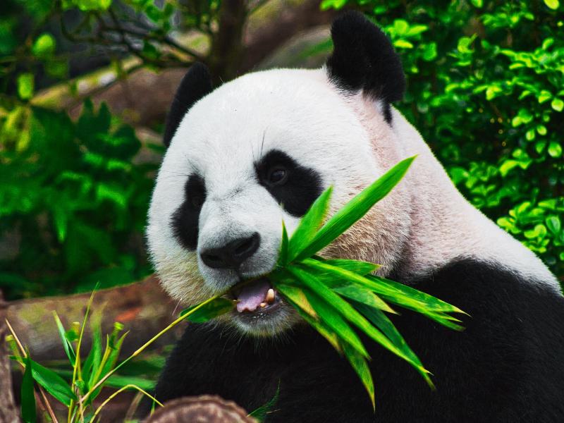 夜遊動物園超新奇!台北市立動物園暑期開放到晚上9點
