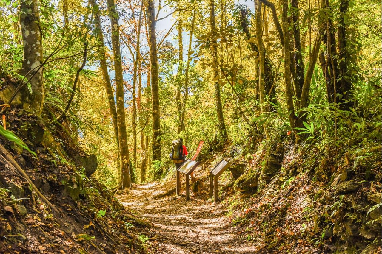 【疫情封境】山林行程蔚為風潮 奧丁丁體驗推薦秋季山林路線TOP5