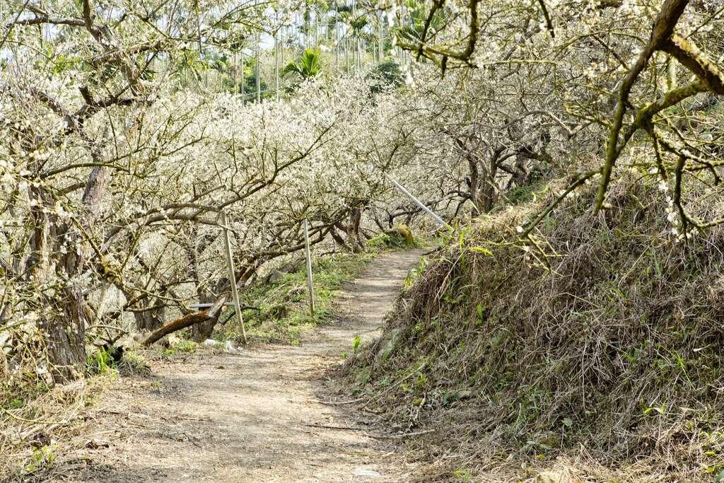 台南除了美食還能怎麼玩?走進台南Top8森林步道 感受自然山林之美