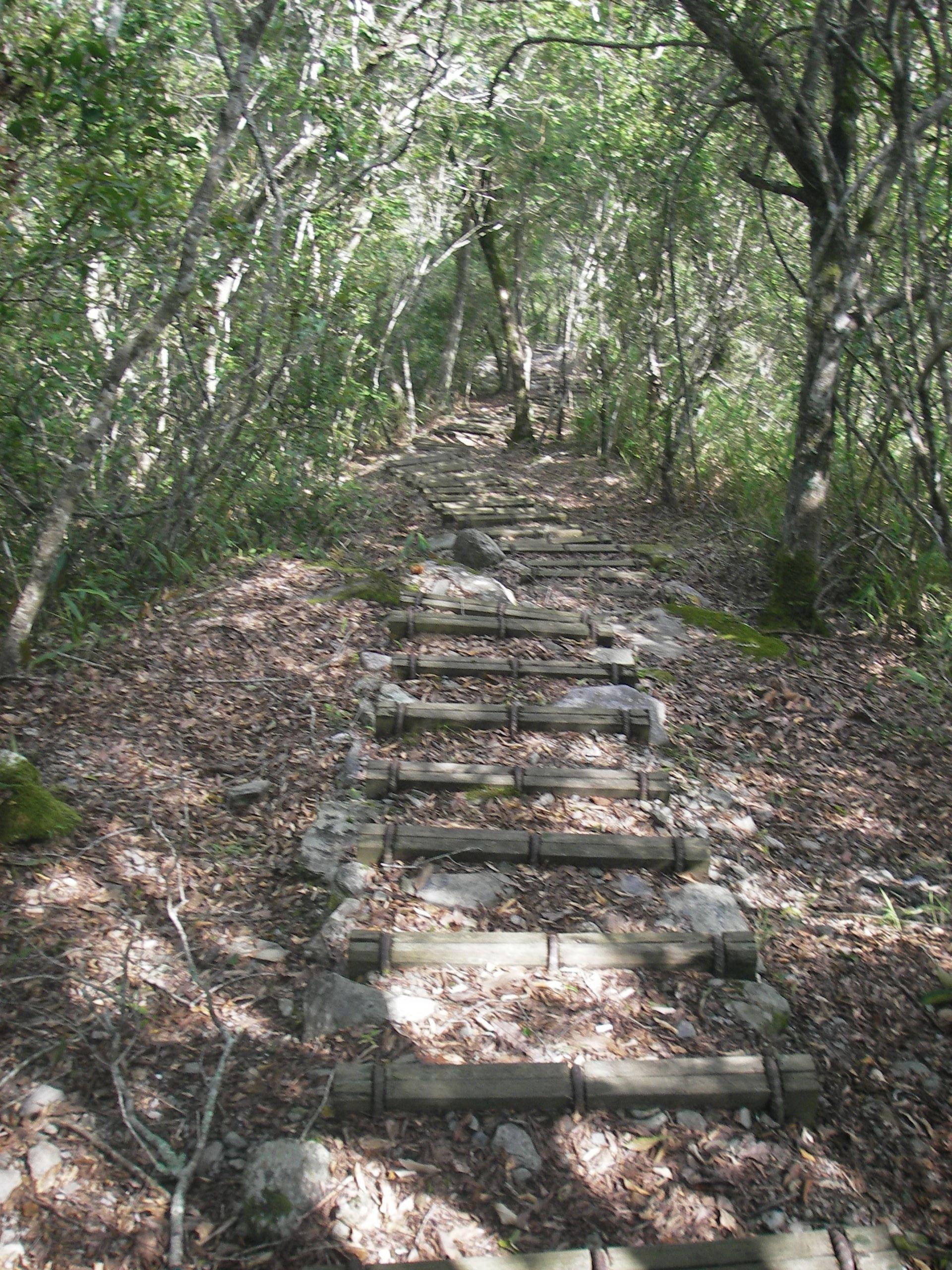 花蓮私房登山步道Top7|親近花蓮的好山好水 征服超美登山步道