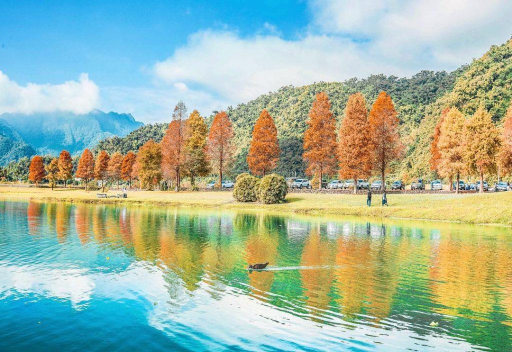 秋季追金趣~宜蘭太平山山毛櫸步道x周邊玩法推薦 一探金色美景