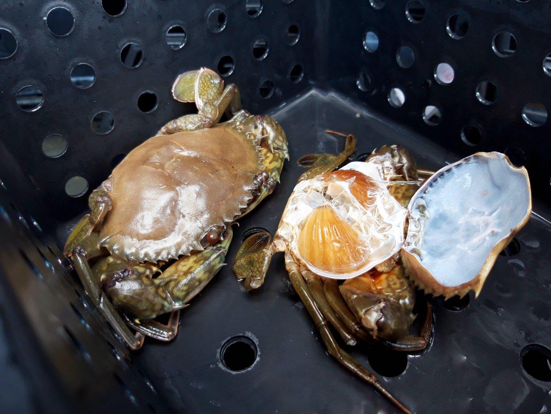 螃蟹不可生吃