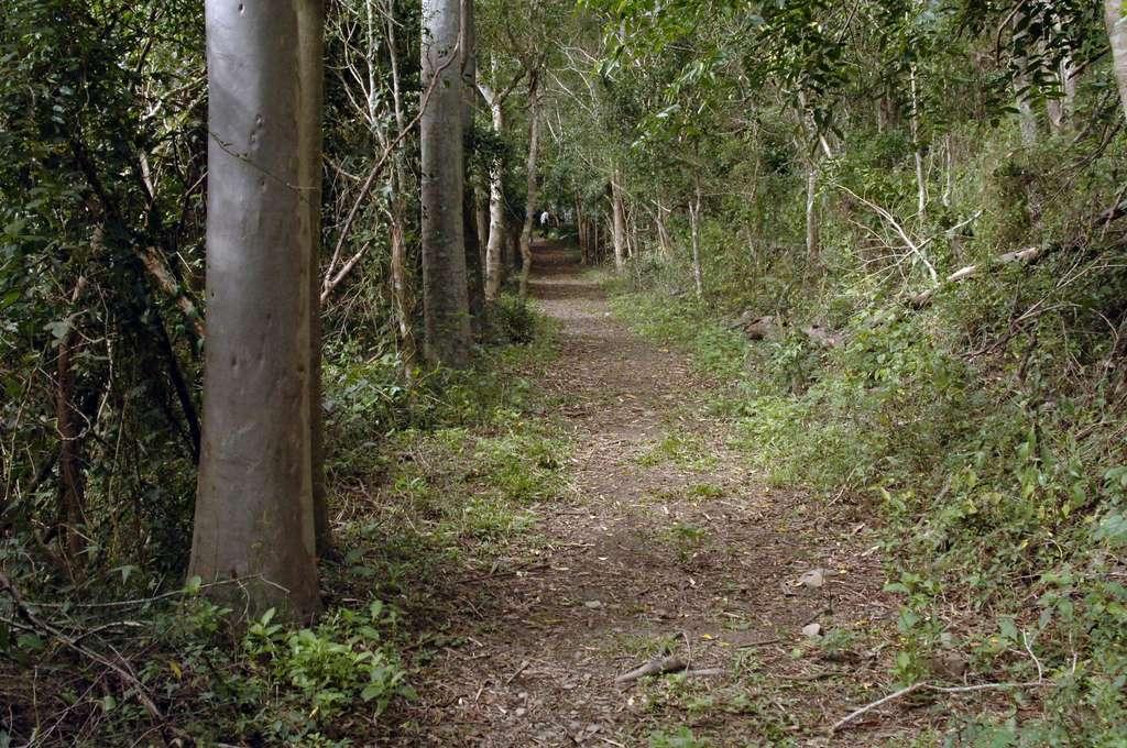 台東山林森呼吸|走入台東私房登山步道Top8 感受清新大自然